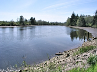 Image, 2004, Deep River, Washington, looking downstream, at mouth, click to enlarge