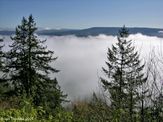 Image, 2005, fog from Bradley State Wayside, Oregon, click to enlarge