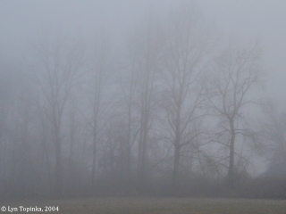 Image, 2004, fog, click to enlarge