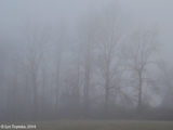 Images, 2004, Fog so thick