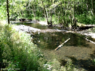 Image, 2005, Germany Creek near mouth, click to enlarge