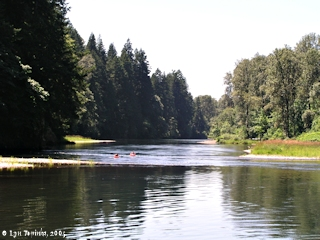 Image, 2005, North Fork Lewis River at Cedar Creek, looking downstream, click to enlarge