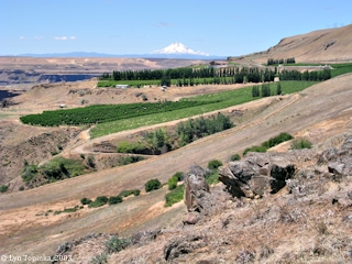 Image, 2003, Mount Hood as seen from Maryhill Museum, click to enlarge
