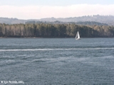 Image, 2003, Sandy Island, from Kalama, Washington