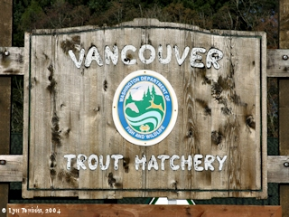 Image, 2004, Vancouver Trout Hatchery, click to enlarge