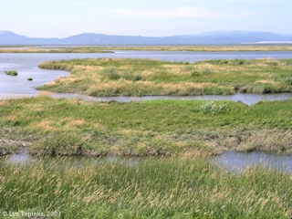 Image, 2003, Lewis and Clark National Wildlife Refuge, Cathlamet Bay, click to enlarge