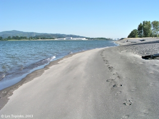 Image, 2003, Prescott Beach, Oregon, upstream view, click to enlarge
