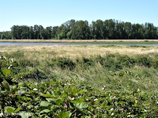 Image, 2003, Carty Lake and meadow, Ridgefield NWR, Cathlapotle area, click to enlarge
