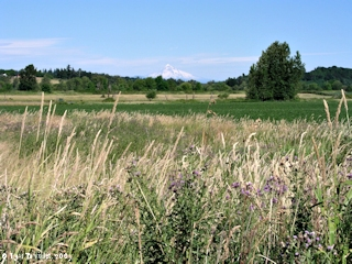 Image, 2003, Mount Hood and the Shillapoo Lake wildlife area, click to enlarge