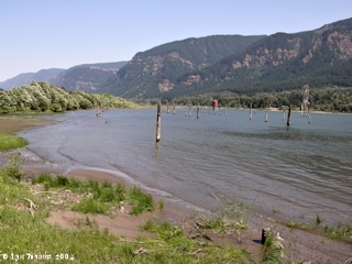 Image, 2004, Columbia River looking upstream from Skamania Landing, click to enlarge