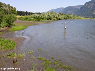 Image, 2004, at Skamania Landing looking upstream, click to enlarge