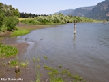 Image, 2004, Skamania Landing looking upstream