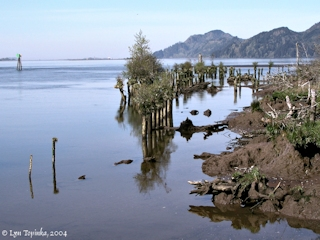Image, 2004, Skamokawa Landing, Washington, click to enlarge