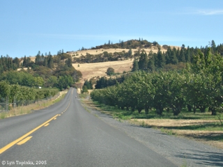 Image, 2005, Orchards, Mosier, Oregon, click to enlarge