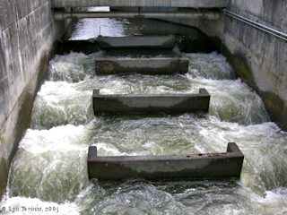 Image, 2005, Bonneville Dam Fish Ladder, click to enlarge