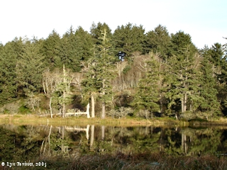 Image, 2005, Cape Disappointment State Park, O'Neil Lake, click to enlarge