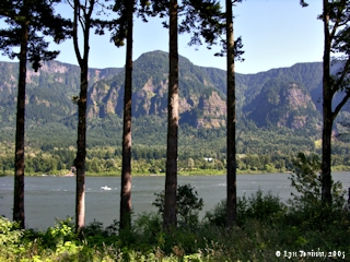 Image, 2005, Oregon shore through trees, from Skamania Landing, click to enlarge