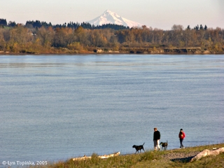Image, 2005, Columbia River, Mount Hood, Sauvie Island, click to enlarge