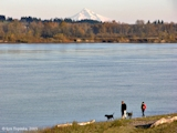 Image, 2005, Columbia River, Mount Hood, from Sauvie Island