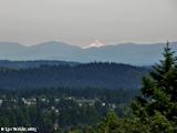Images, 2005, Mount Jefferson from Rocky Butte