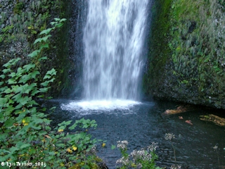 Images, 2005, Pool, Multnomah Falls, Oregon, click to enlarge