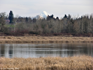 Image, 2005, Post Office Lake and Mount Hood, click to enlarge