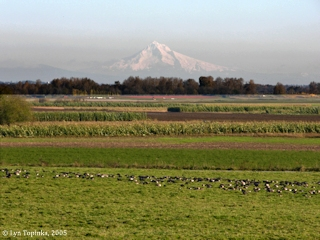 Image, 2005, Sauvie Island and Mount Hood, click to enlarge