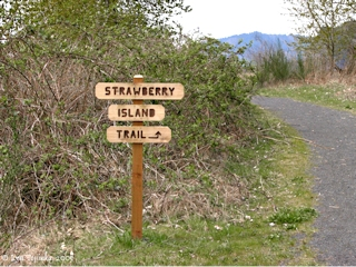 Image, 2005, Strawberry Island Trail sign, click to enlarge
