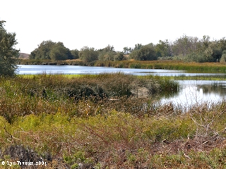 Image, 2005, Umatilla National Wildlife Refuge, McCormack Unit, click to enlarge