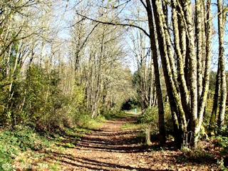 Image, 2005, Trail, Wapato Access Greenspace, Sauvie Island, click to enlarge