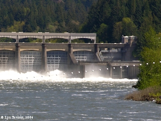 Image, 2006, Bonneville Dam Spillway, Oregon side, click to enlarge