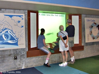 Image, 2006, Bonneville Dam Fish Window, click to enlarge