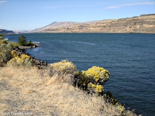 Image, 2006, Columbia River downstream John Day Dam, click to enlarge