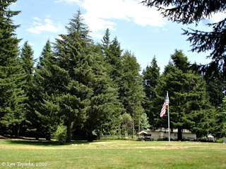 Image, 2006, Iman Cemetery, Stevenson, Washington, click to enlarge