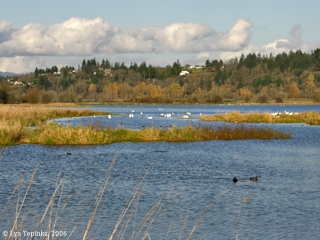 Image, 2006, Ridgefield from Ridgefield National Wildlife Refuge, click to enlarge