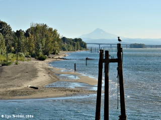 Image, 2006, Washington shore from Tidewater Cove, click to enlarge