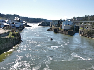 Image, 2006, Willamette River upstream as seen from the Oregon City Bridge, click to enlarge
