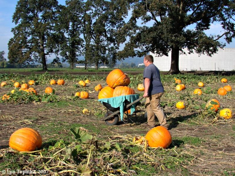 Pumpkin Patch Woodland Washington