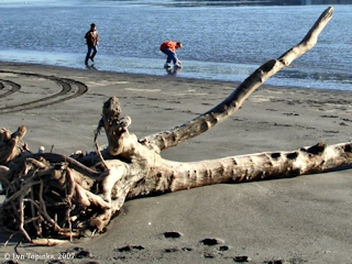 Image, 2007, Willow Grove Beach, click to enlarge