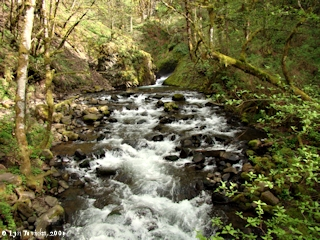 Image, 2009, Bridal Veil Creek, Oregon, click to enlarge