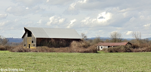 Image, 2011, Old Barns, Sauvie Island, click to enlarge