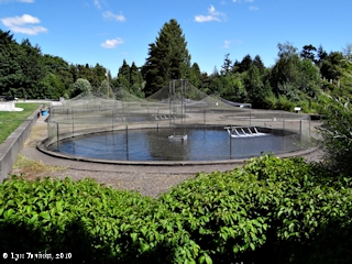 Image, 2011, Vancouver Trout Hatchery, click to enlarge