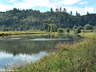 Image, 2012, Beaver Slough, Oregon, click to enlarge