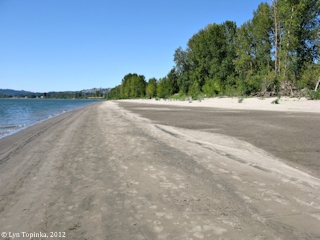 Image, 2012, Cottonwood Beach, Washougal, Washington, upstream, click to enlarge