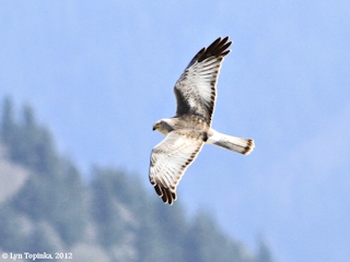 Image, 2012, Steigerwald Lake NWR, click to enlarge