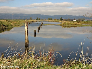 Image, 2013, Beaver Slough, Oregon, click to enlarge