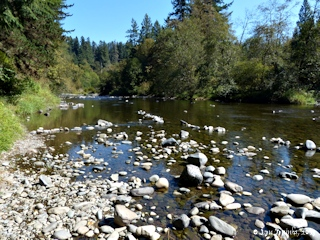 Image, 2013, East Fork Lewis River, click to enlarge