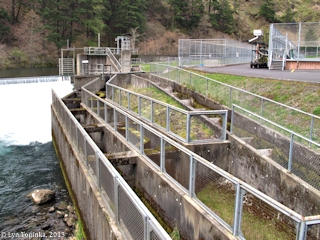 Image, 2013, Little White Salmon National Fish Hatchery, click to enlarge