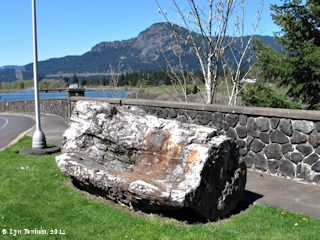 Image, 2014, Petrified Wood, Bonneville Dam, on the Columbia River click to enlarge