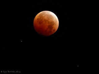 Image, 2014, Lunar Eclipse, click to enlarge